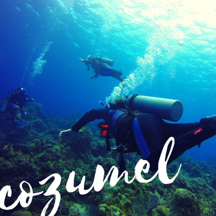 Discovery Cozumel Experience